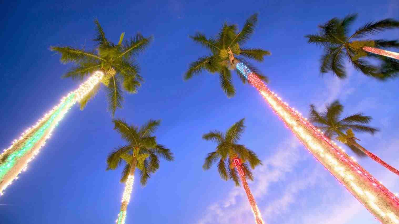 Christmas Lights Palm Tree